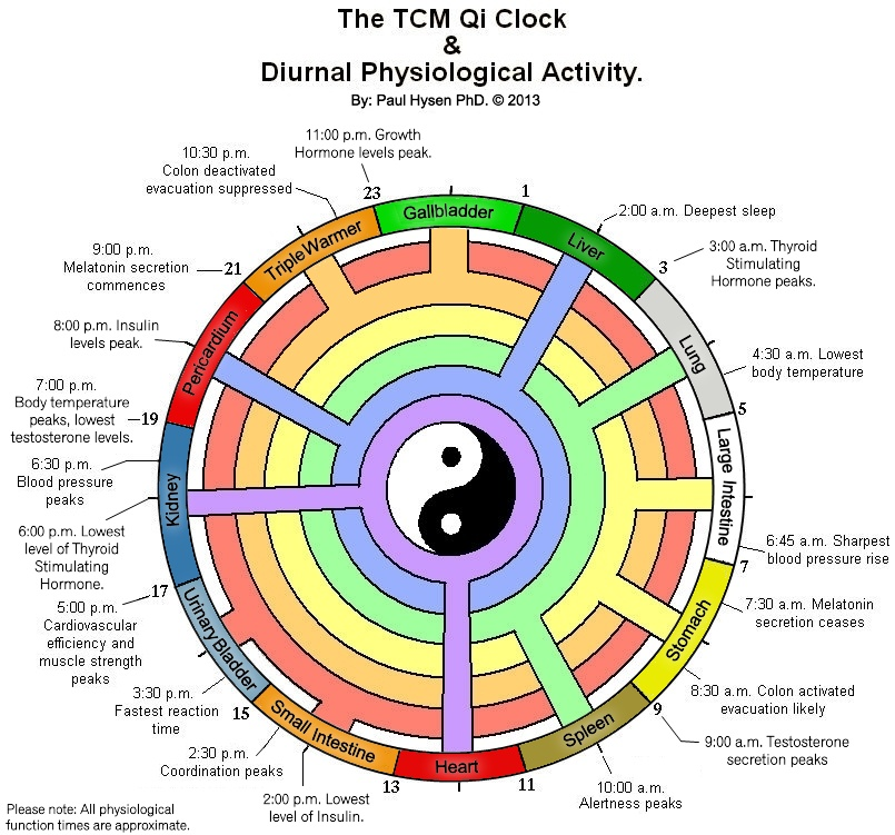 Qi Clock and the Diurnal Cycle